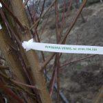 pepiniera-venig-09